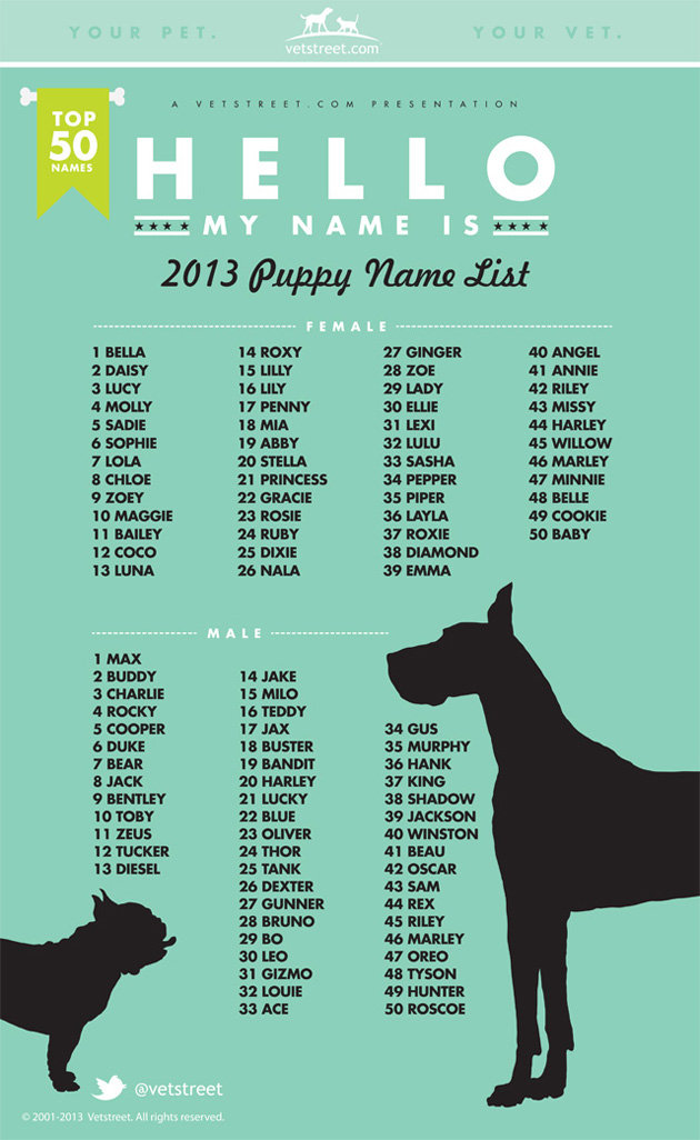 Top Pet Names Of 2013 Max And Bella Top The List Again Sleepy